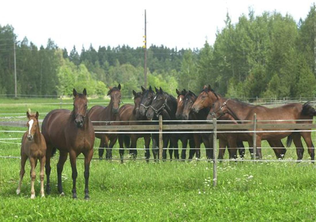 Hästparadiset Gundbo, foto Mats Hansson